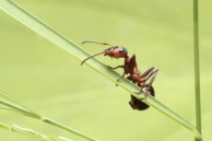 Ant on blade of grass.